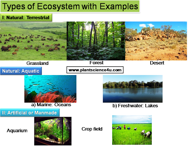 Examples of ecosystem