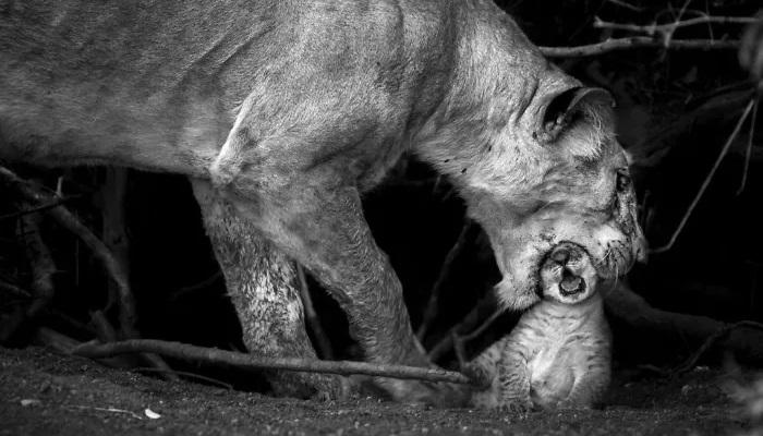 10 Foto Menakjubkan dari Finalis Kontes Foto Perjalanan National Geographic 2019