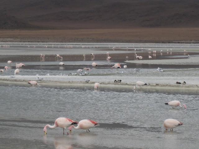 Saltsjoar och flamingor pa hog hojd