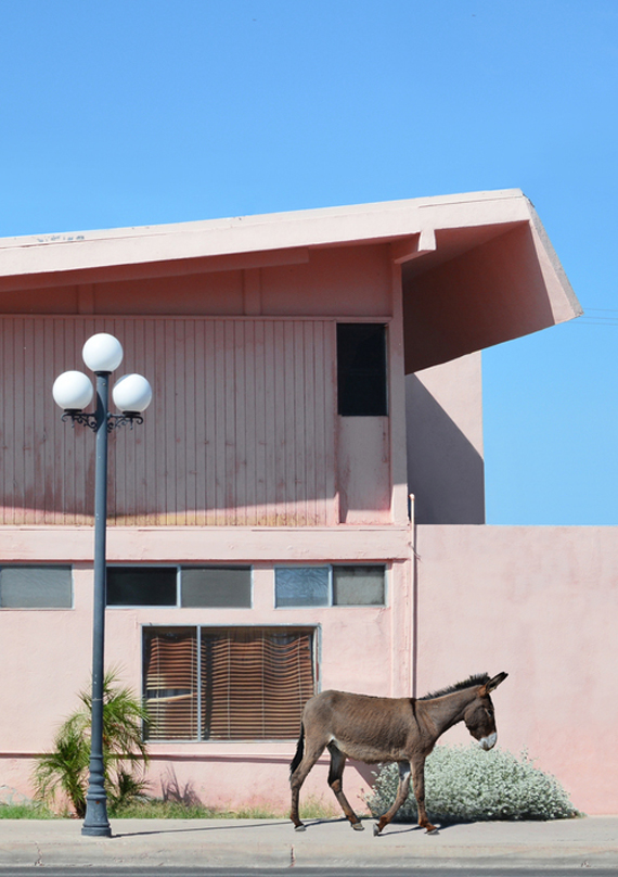 Hayley Eichenbaum Palm Springs photos, pink house and donkey