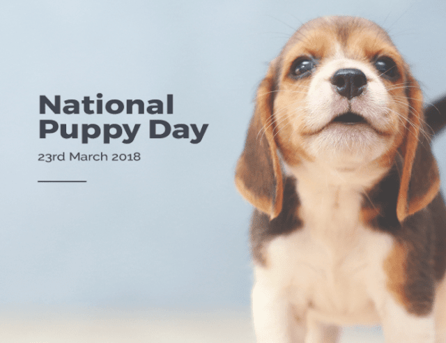 National Puppy Day Instagram Captions
