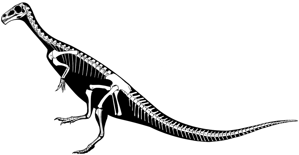 Waxing Paleontological: Chilesaurus and Avian Arm Folding