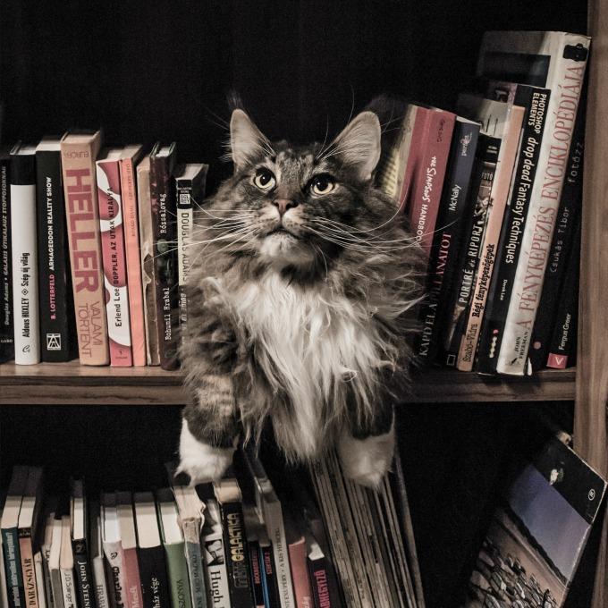 Livros apaixonantes para ler nas ferias