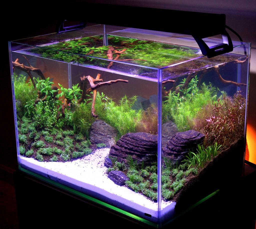 Tar m siteniz akvaryum s sleme sanat for Planted fish tank