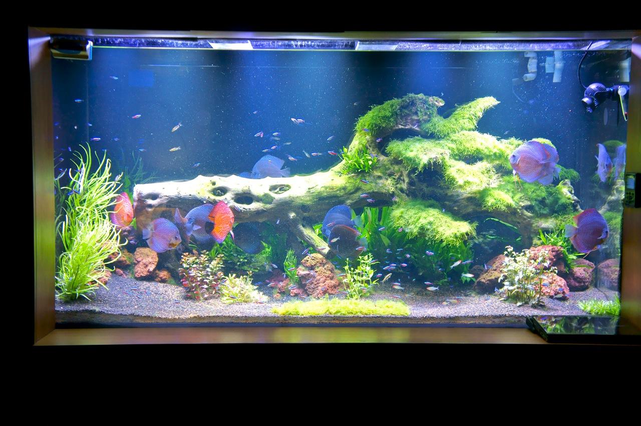Led Aquarium Lighting Blog Orphek Orphek Pr 72 Led