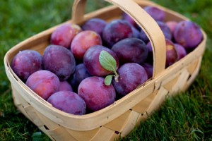buah plum penangkal radikal bebas