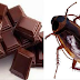 FDA confirma que foram encontrados restos de baratas e insetos dentro de chocolate