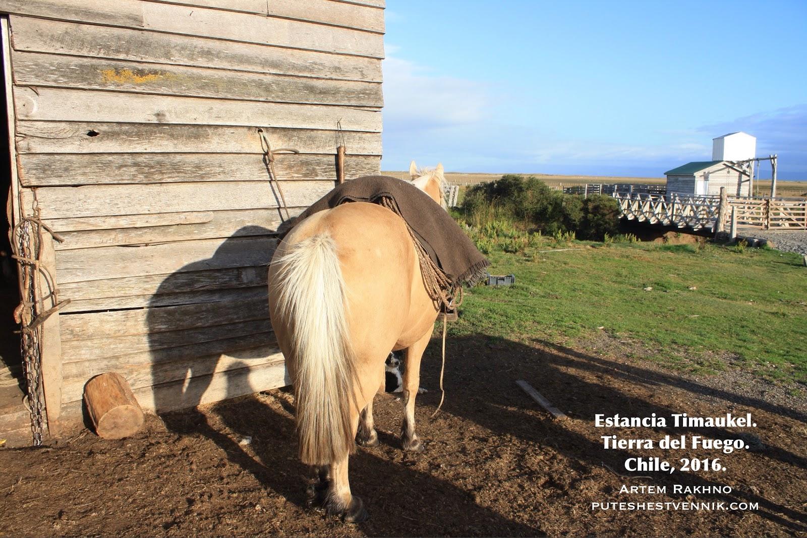Лошадь у сарая на эстанции Тимаукель