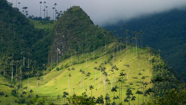 Vale de Cocora - Colômbia