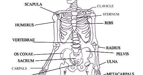 Kid Science at Home: Singing and Dancing Bones