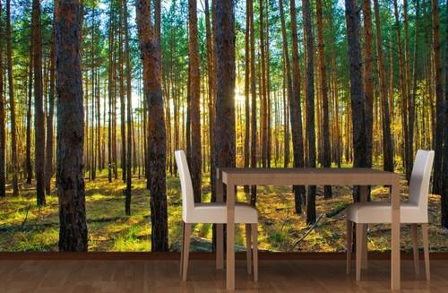 metsä tapetti Metsä Taustakuva valokuvatapetti metsä tapetti metsien puunrungot rahasto Taustakuva Forest Taustakuva