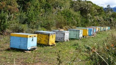 Ηγουμενίτσα: 21χρονος ημεδαπός έκλεβε μελίσσια