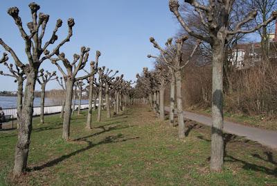 Mittelhohe, kahle Bäume stehen in einer Reihe und bilden dadurch eine Art Gang