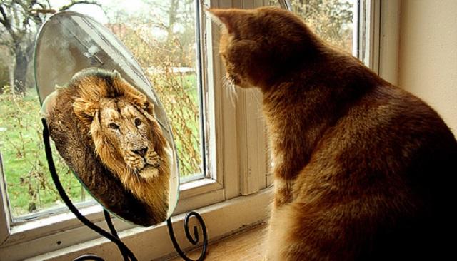 Humanidades Em Debate: O gato em frente ao espelho...