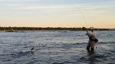 Fly Fishing for Bass Saint Lawrence River