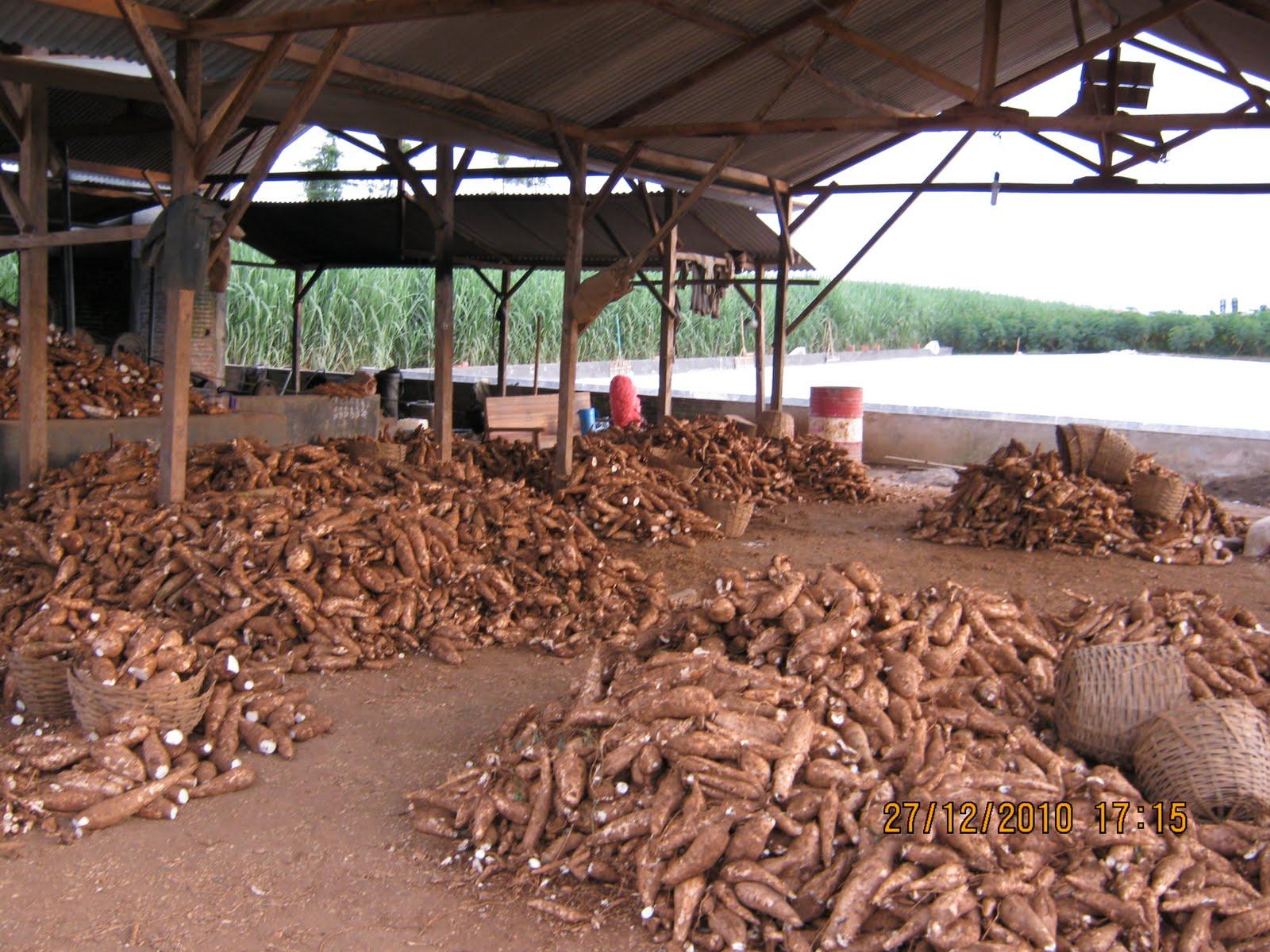 Pabrik Tepung Tapioka Mesin tepung: Mesin pe...
