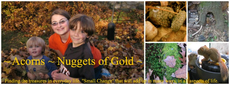 ~ Acorns ~ Nuggets of Gold ~