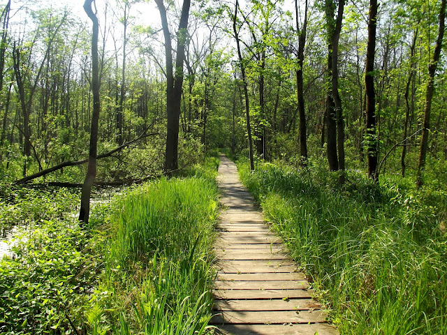 Marshy Trail - Dune State Park
