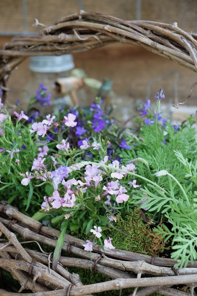 spring potting bench favorite flowers lavender colored lobelia