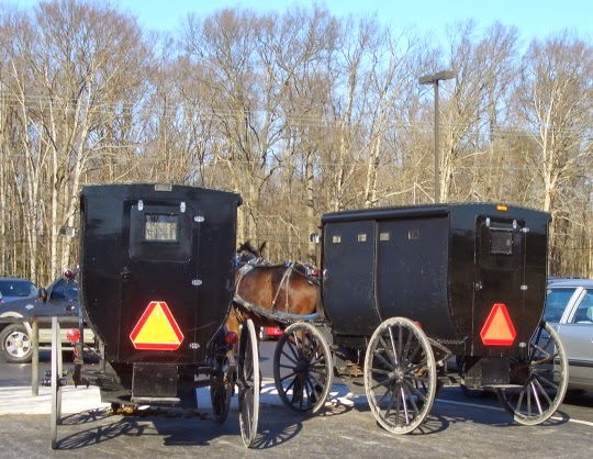 Dover Amish Buggy