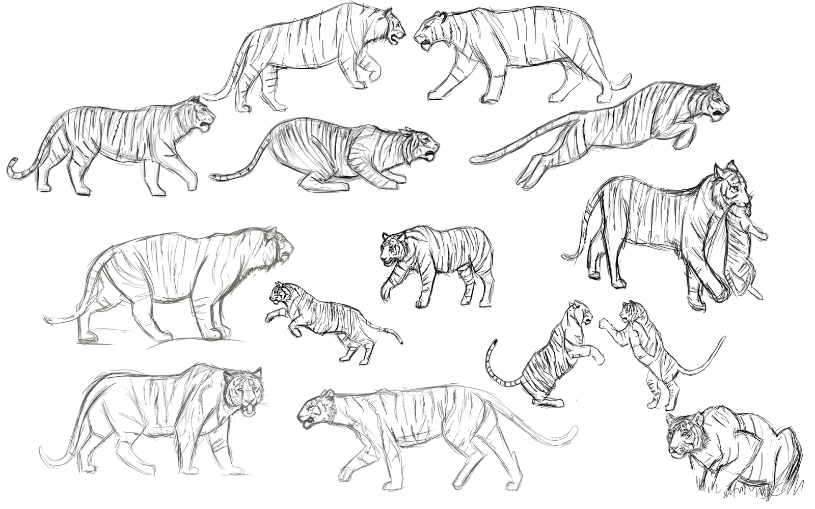 CT5CHAP Character Animation And Performance : Tiger Study