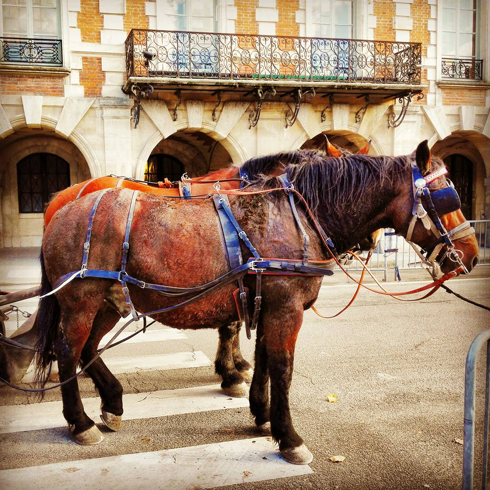 Horses in Le Marais Paris I Travelling Hopper