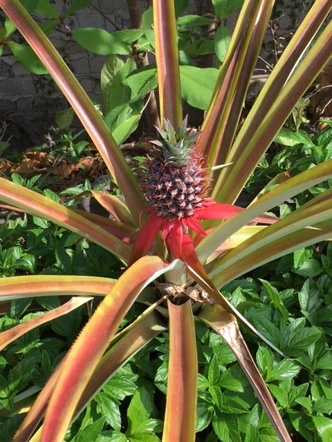 Amor Boutique Hotel pineapple