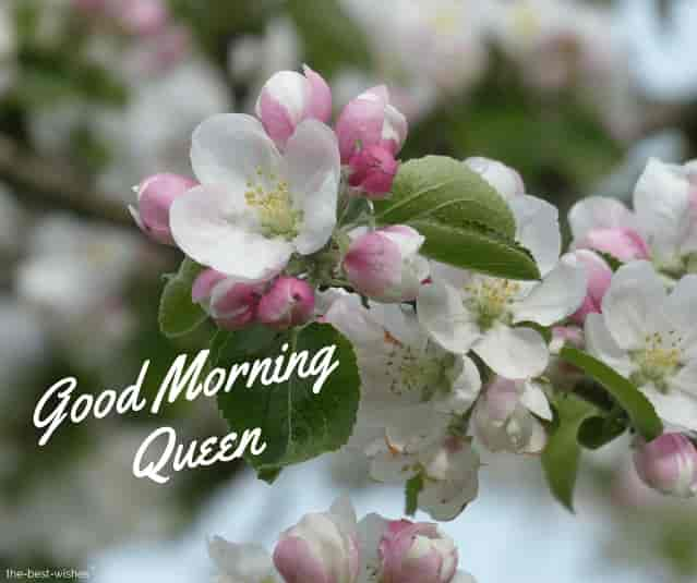 good morning queen pictures
