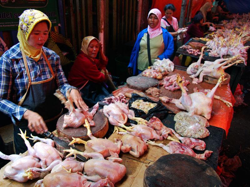 Info Harga Ayam Potong Hari Ini Harga Ayam Broiler Hari Ini Ardhi Borneo Gemilang Pekanbaru Artikelkeren News Harga Daging Ayam Potong Disejumlah