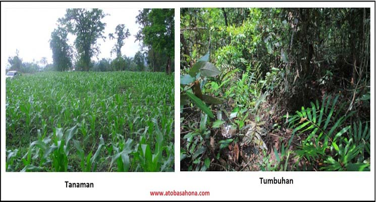 Inilah Perbedaan Penting Antara Tumbuhan dan Tanaman