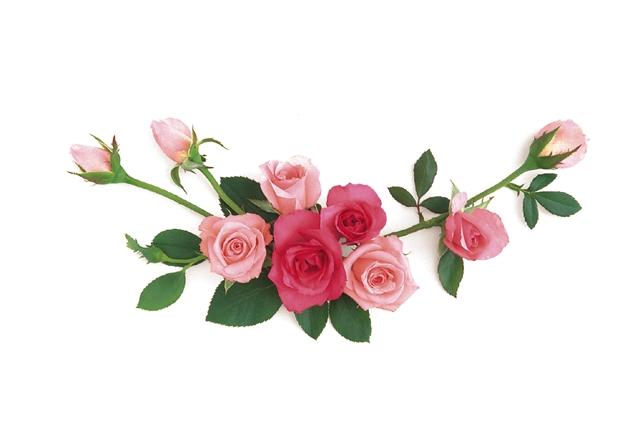 Pink Fall Wallpaper Hd Roses Photos S H O W