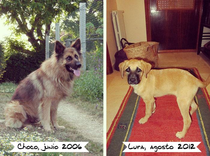La historia deChoco & Lura. Adopción de mascotas