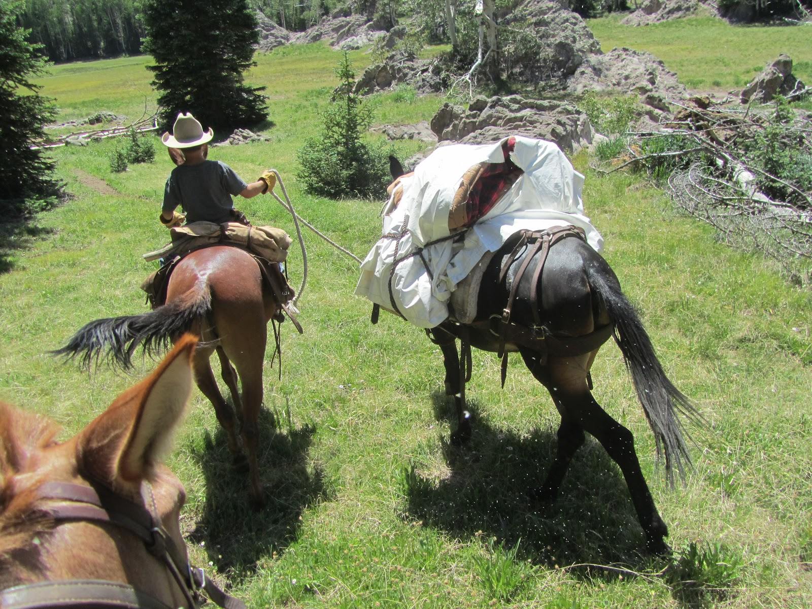 Pack Mule Pictures to Pin on Pinterest - PinsDaddy