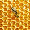 Madu Dikerubungi Semut, Apakah Artinya Madu Itu Palsu?
