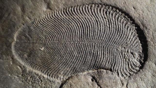 Fóssil animal mais antigo do mundo, de meio bilhão de anos, é descoberto