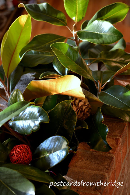 Postcards from the Ridge. Use fresh magnolia branches and leaves for holiday decor. Lots of other great ways to use natural items here.