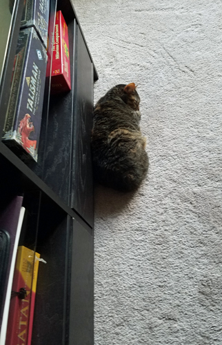 image of Sophie the Torbie Cat curled up next to a shelf with board games, including Talisman and Settlers of Catan, stored on it