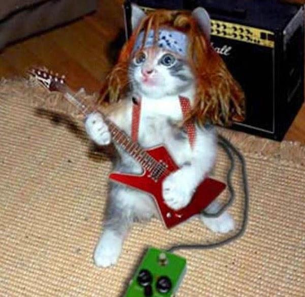 Fotos Divertidas de Gatos, parte 4