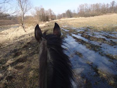 jak się tarzają konie