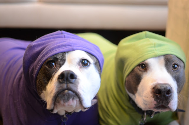 Dog hoodies for pitbulls