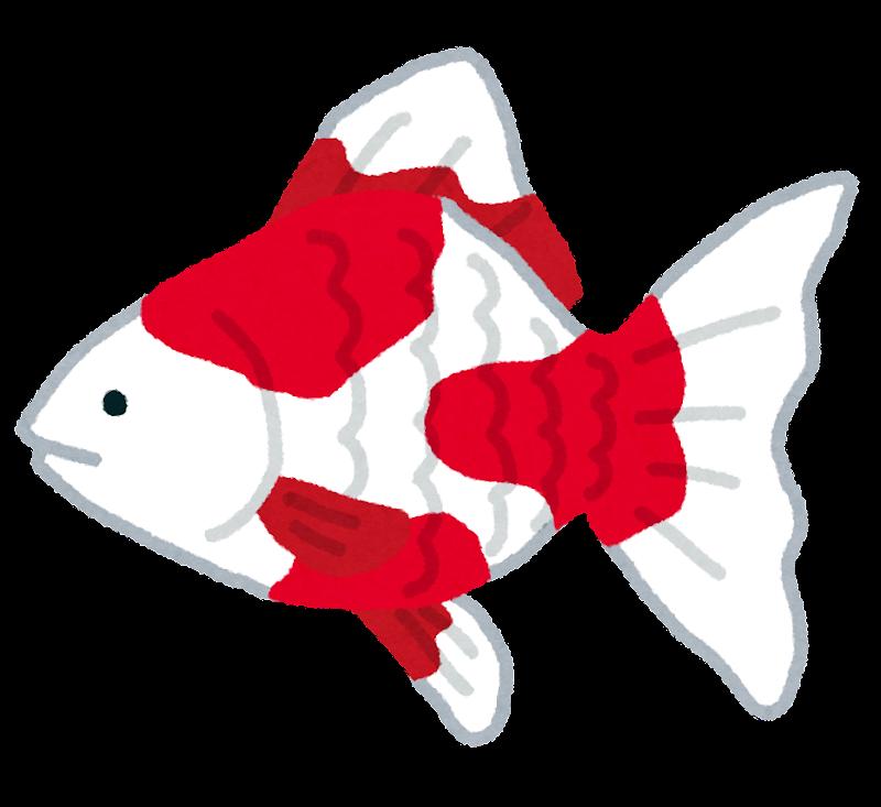 金魚のイラスト魚 かわいいフリー素材集 いらすとや