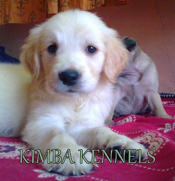 Kimba Kennels