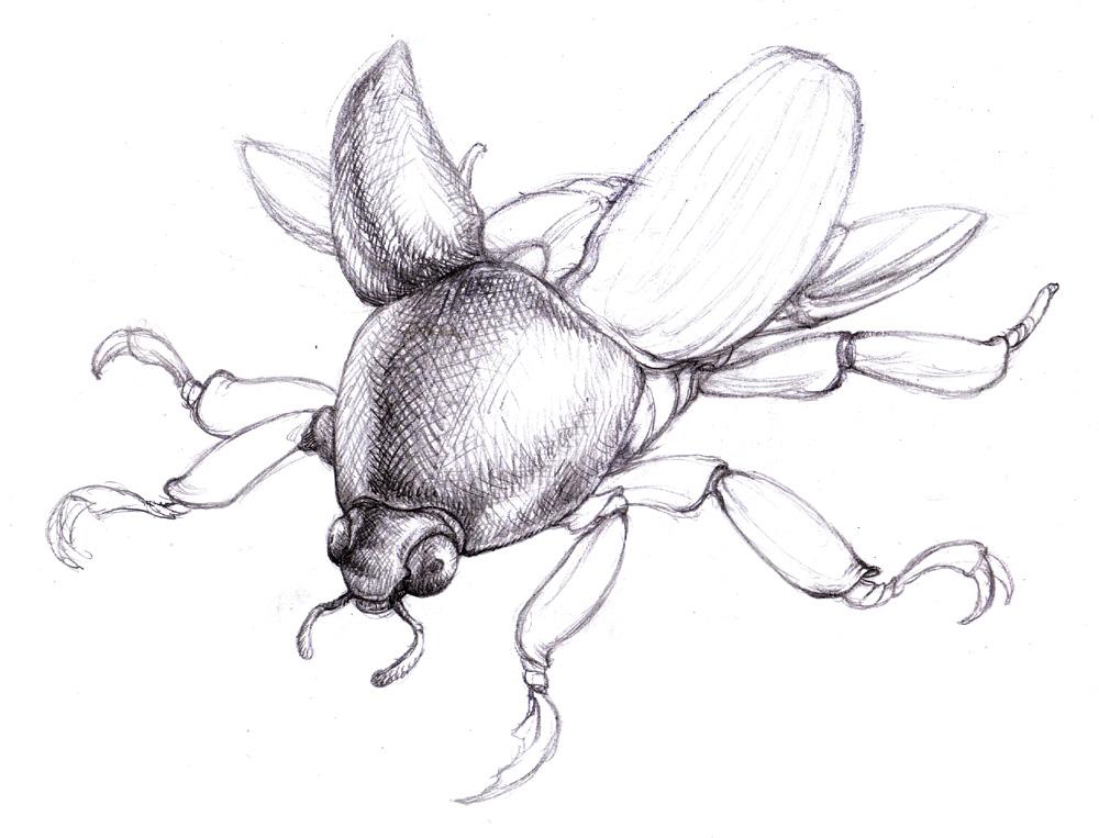 Scarab Beetle Drawing 21781 | NOTEFOLIO