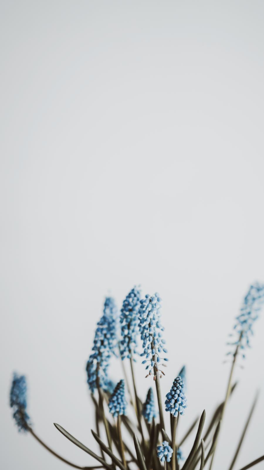 Imagem minimalista com flores azuis