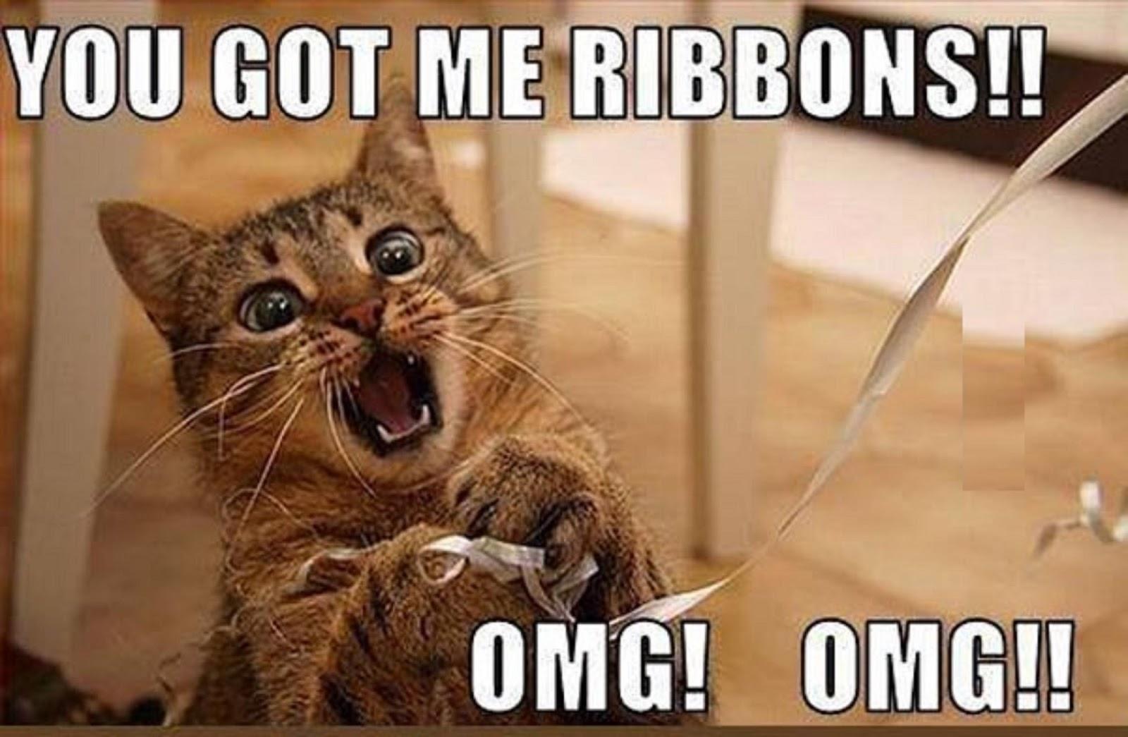 Birthday Meme Cat