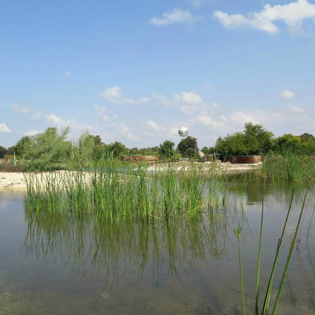 השתקפויות של צמחי מים במרכז המפרות 'ראש ציפור' שבפארק הירקון