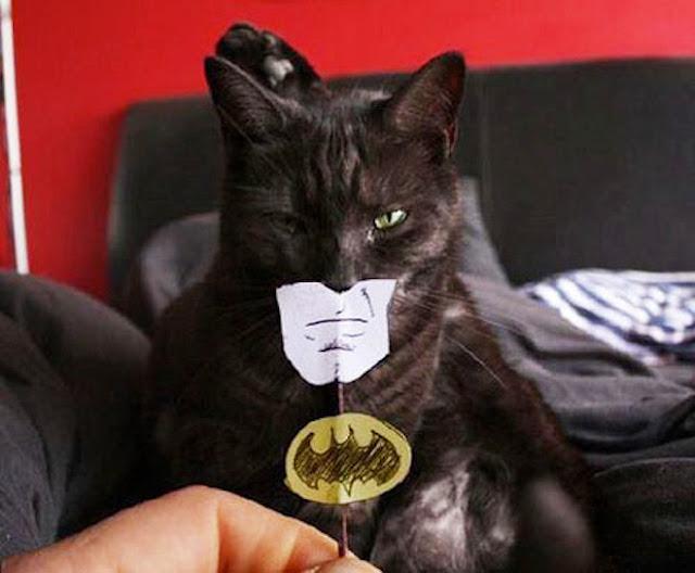 Batman cat picture
