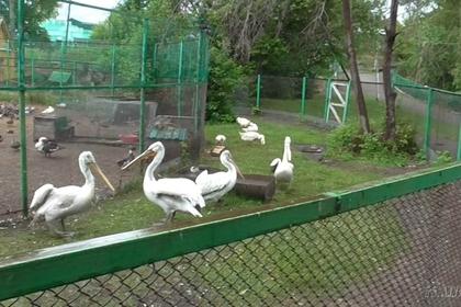 Жители Омской области сделали шашлык из птиц занесённых в Красную книгу