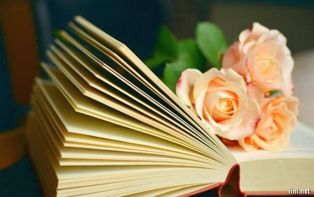 ảnh hoa hồng và cuốn sách