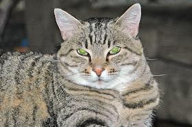 Katie's Cat, Simon